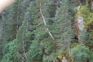 Alaska 2007 587