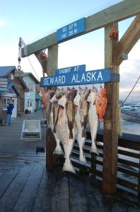 Alaska 2007 747