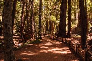 Big Sur State Park-1