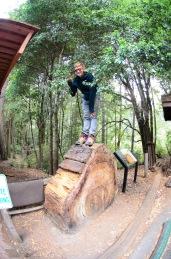 Portola Redwoods State Park-2
