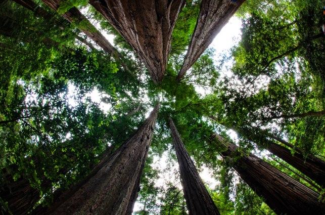 Portola Redwoods State Park-43