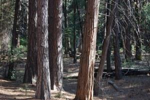 California 2008 (293)