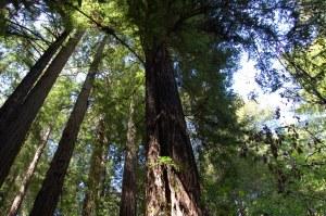 California 2008 (559)