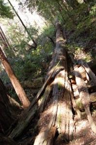 California 2008 (572)