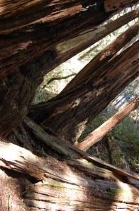 California 2008 (573)