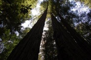 California 2008 (577)