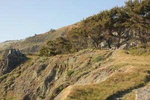 California 2008 (620)