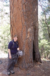 California 2008 (98)