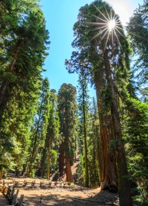 Sequoia Kings Canyon-102