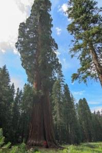Sequoia Kings Canyon-1062