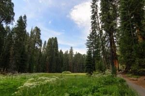 Sequoia Kings Canyon-1064