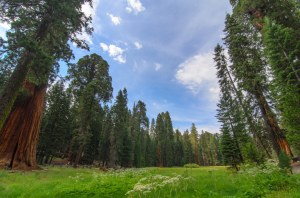 Sequoia Kings Canyon-1070