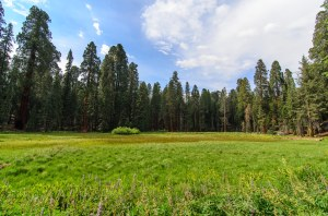 Sequoia Kings Canyon-1076