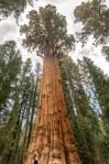 Sequoia Kings Canyon-1116