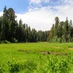 Sequoia Kings Canyon-865