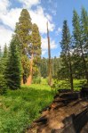 Sequoia Kings Canyon-899