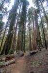Sequoia Kings Canyon-925