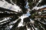 Sequoia Kings Canyon-940