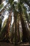 Sequoia Kings Canyon-946