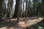 Sequoia Kings Canyon-947