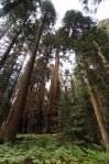 Sequoia Kings Canyon-955