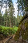 Sequoia Kings Canyon-961