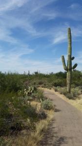 Phoenix 2014 024
