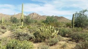 Phoenix 2014 036