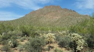 Phoenix 2014 049