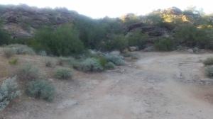 Phoenix 2014 071