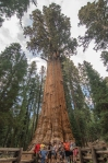 Sequoia Kings Canyon-1127-2