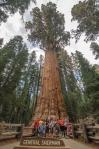 Sequoia Kings Canyon-1127