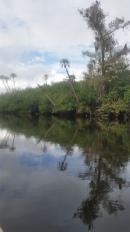 Loxahatchee River-31