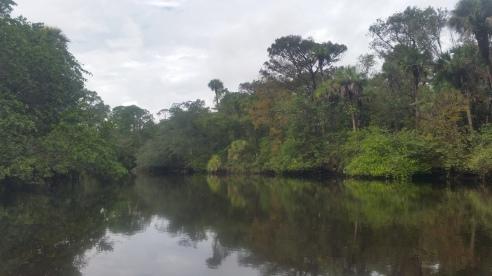 Loxahatchee River-7