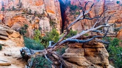 East Canyon Overlook 5S-8