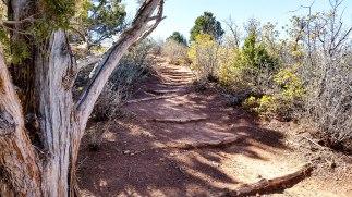 Kolob Canyon 5S-9
