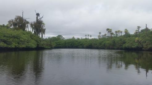 Loxahatchee River-3