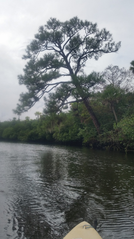 Loxahatchee River-4