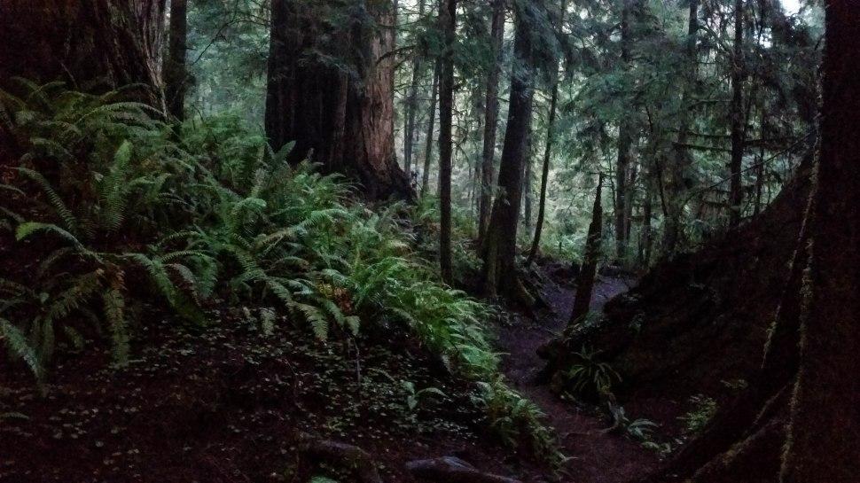 Boy Scout Tree Trail 5S-53.jpg