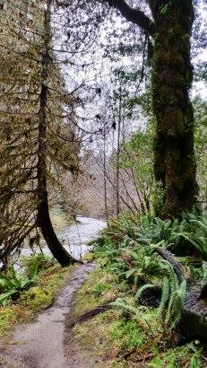 Mill Creek Trail 5S-20
