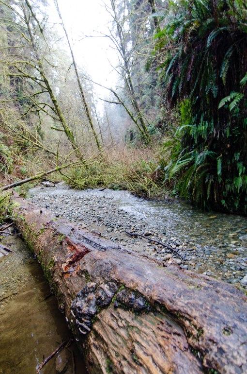 Prairie Creek-27