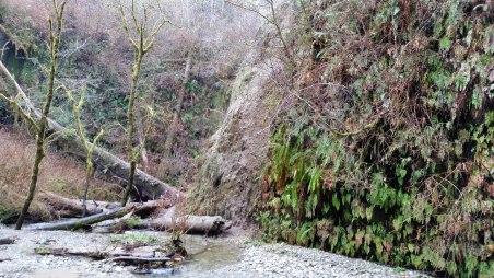 Prairie Creek 5S-128